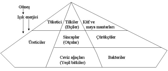 10157d1170689414 ekosistem ekosistem