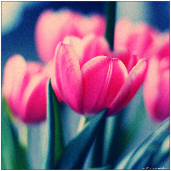 Ad:  Spring_Flower_Shot_by_hesitation.jpg Gösterim: 401 Boyut:  82.8 KB