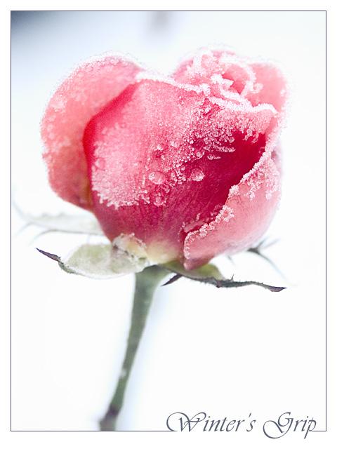 Ad:  Winter.jpg Gösterim: 314 Boyut:  107.3 KB