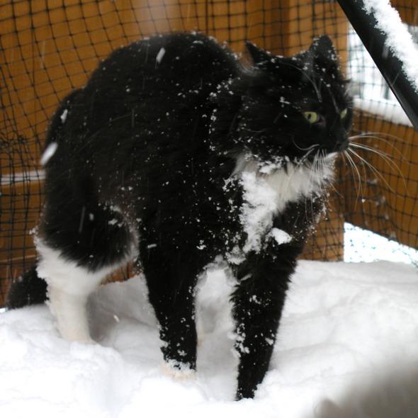 Ad:  Fun__Crazy_Zimba_in_the_snow_by_lexidh.jpg Gösterim: 2350 Boyut:  93.0 KB