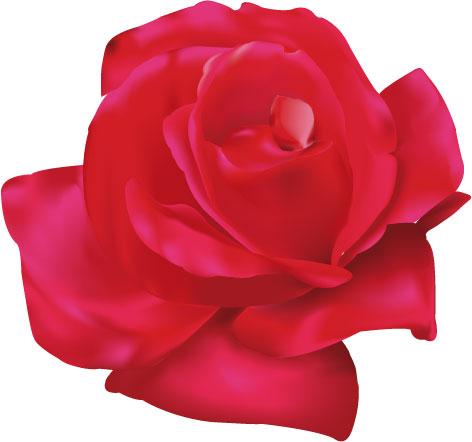 Ad:  Rose_by_Dro18.jpg Gösterim: 407 Boyut:  45.3 KB