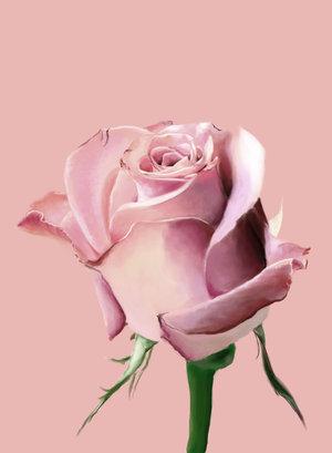 Ad:  Pink_Rose_by_hagrid78.jpg Gösterim: 622 Boyut:  15.9 KB