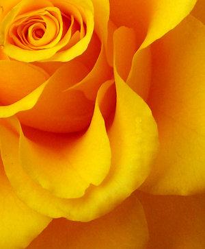 Ad:  yellow_by_DeadsoulDreaming.jpg Gösterim: 723 Boyut:  24.0 KB