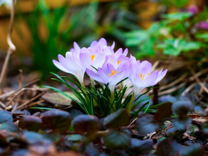 Ad:  spring-flowers-1024-768-5101.jpg Gösterim: 493 Boyut:  47.0 KB