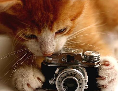 Ad:  Catography_101.jpg Gösterim: 207 Boyut:  31.8 KB