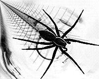 �r�mcek Resimleri-dance-of-the-water-spider-by-aquapell.jpg
