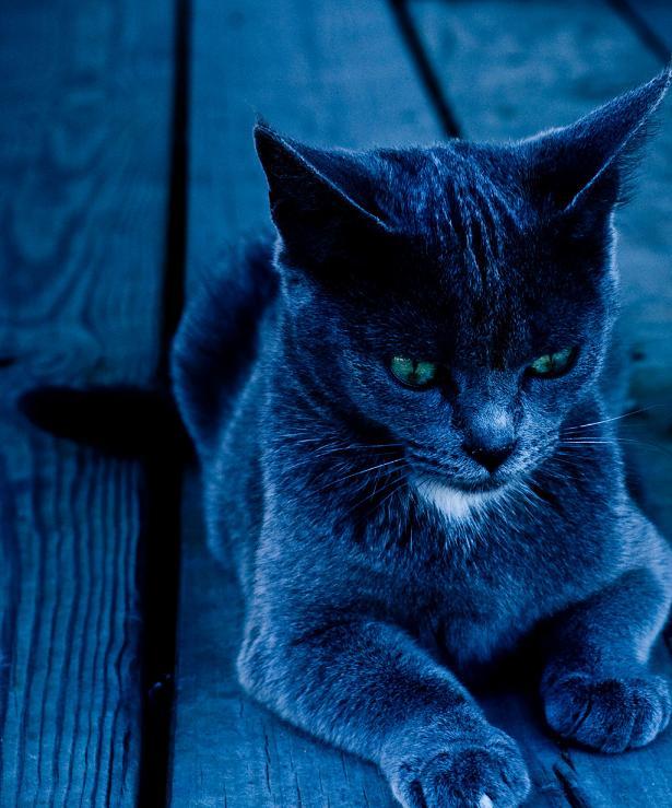 Ad:  the_cat__by_lordofmeesi.jpg Gösterim: 557 Boyut:  70.5 KB