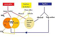 Biogaz (Biyogaz) Nedir? Nerelerde Kullan�l�r?-organik-madde-donusumu.jpg