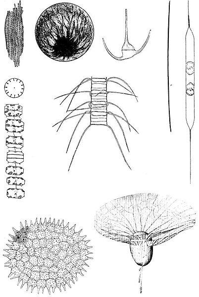 Ad:  402px-Plankton.jpg Gösterim: 874 Boyut:  49.6 KB
