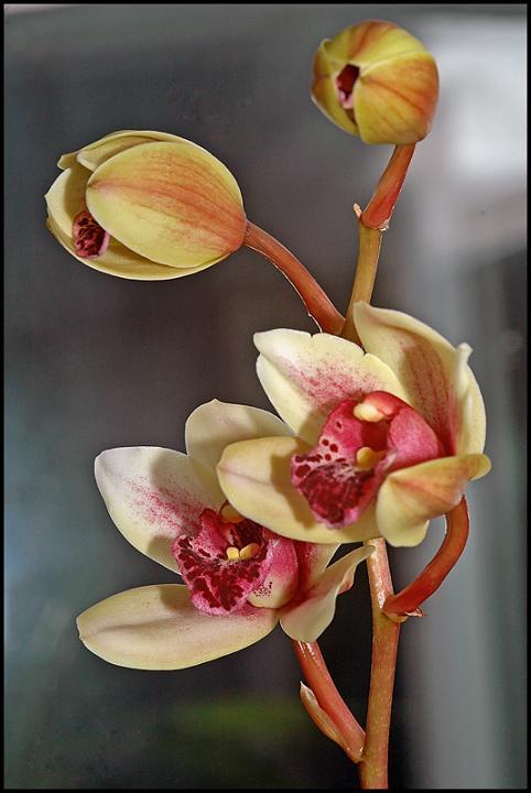 Ad:  all-of-orchid.jpg Gösterim: 572 Boyut:  42.6 KB