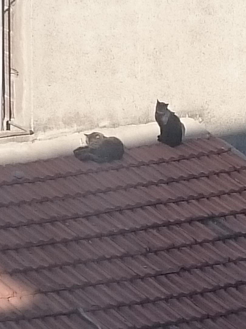 Ad:  Mahellemizin kedileri.jpg Gösterim: 211 Boyut:  78.3 KB