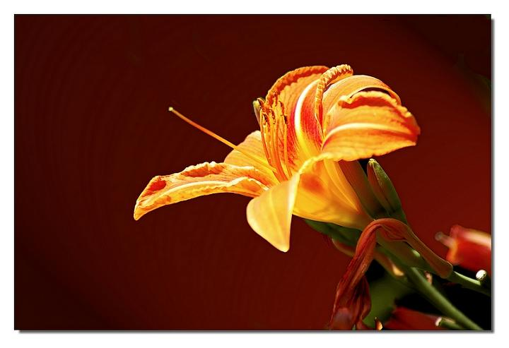 Ad:  fleur_800x600.jpg Gösterim: 231 Boyut:  32.6 KB