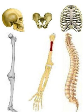 Ad:  iskelet kısımları.JPG Gösterim: 10116 Boyut:  25.5 KB