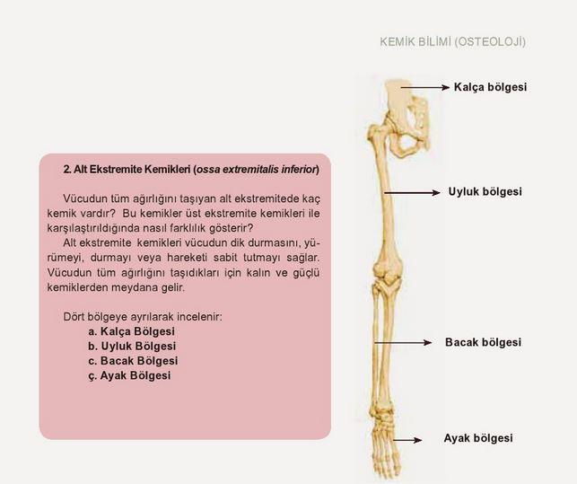 Ad:  k13.JPG Gösterim: 89 Boyut:  43.0 KB