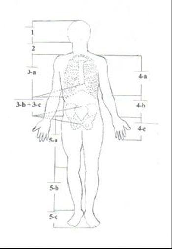 Anatomi Nedir Canlıların Vücut Yapısı Inceleme Bilimi