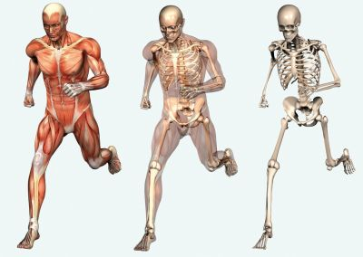 Ad:  anatomi3.jpg Gösterim: 1865 Boyut:  18.1 KB