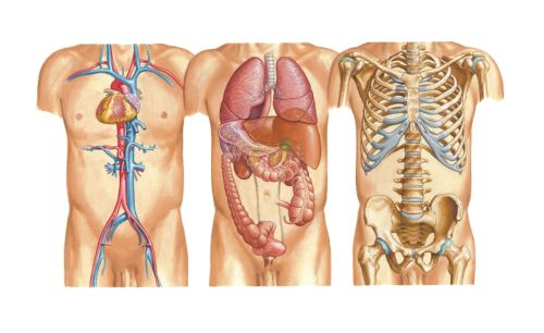 Ad:  anatomi2.jpg Gösterim: 1369 Boyut:  29.7 KB