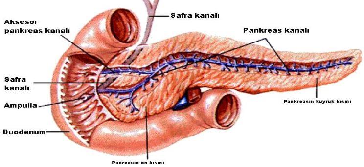 Ad:  pankreas.JPG Gösterim: 4293 Boyut:  53.7 KB