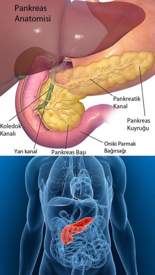 Ad:  pankreasyapısı.jpg Gösterim: 3617 Boyut:  65.6 KB