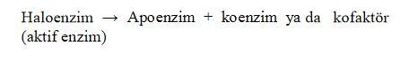 48452d1462217573 enzim nedir enzimler hakkinda e1