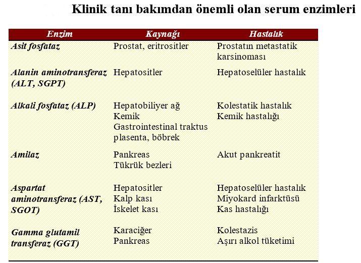 Katalaz enzimi: temel özellikler