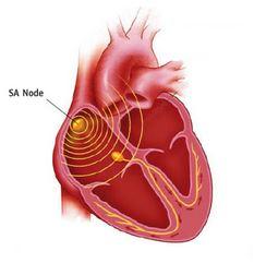 Ad:  kalp10.JPG Gösterim: 925 Boyut:  16.0 KB