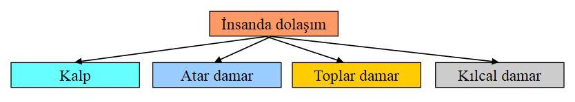 48636d1462812368 dolasim sistemi nedir dolasim sisteminin yapisi ve gorevleri dolassis1