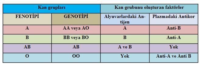 48663d1462836394 kan gruplari ve kan grubu uyumlari kan7