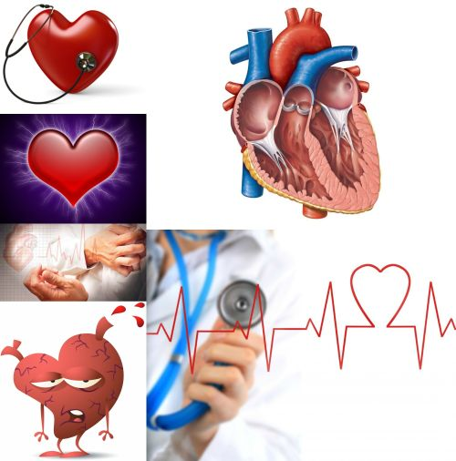 Ad:  kalp nedir.jpg Gösterim: 1153 Boyut:  38.2 KB
