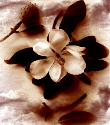 Ad:  a_Flower__s_Luck_by_PyroDemi.jpg Gösterim: 255 Boyut:  33.7 KB