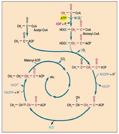 49079d1463865748 lipitler yaglar ve beslenmedeki onemi lipid8