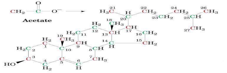 49080d1463865846 lipitler yaglar ve beslenmedeki onemi lipid9