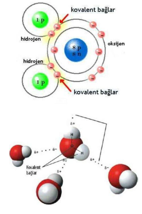 Suyun fiziksel ve kimyasal özellikleri