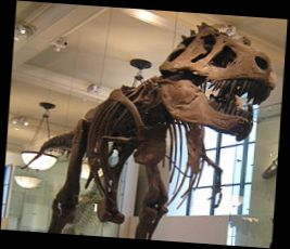 Ad:  fosil.jpg Gösterim: 2123 Boyut:  14.0 KB