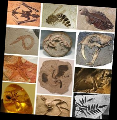 Ad:  fosil4.JPG Gösterim: 3171 Boyut:  39.4 KB