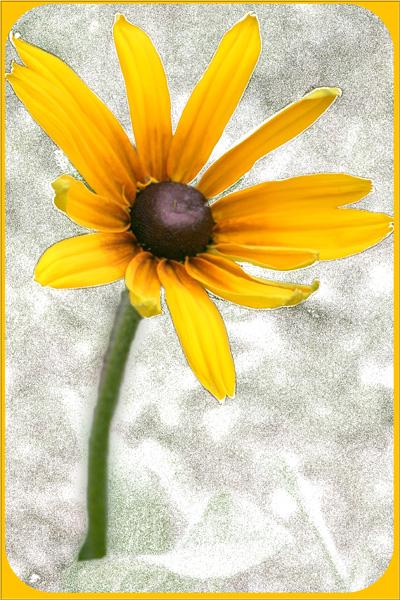 Ad:  wierd_flower1.jpg Gösterim: 254 Boyut:  142.9 KB