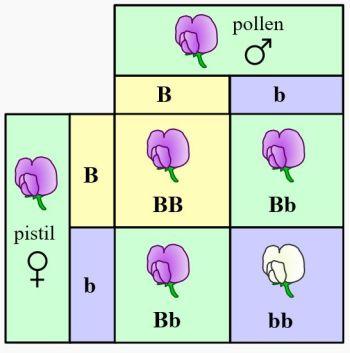 50185d1465316214 genetik kalitim bilimi gen3