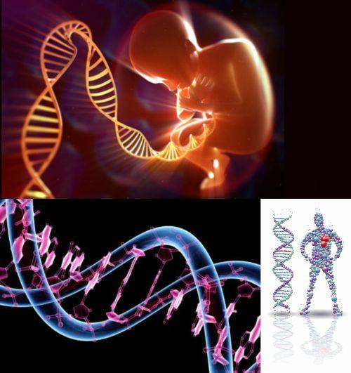 Ad:  Genetik 4.jpg Gösterim: 5614 Boyut:  42.7 KB