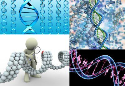 Ad:  Genetik 5.jpg Gösterim: 5415 Boyut:  29.3 KB