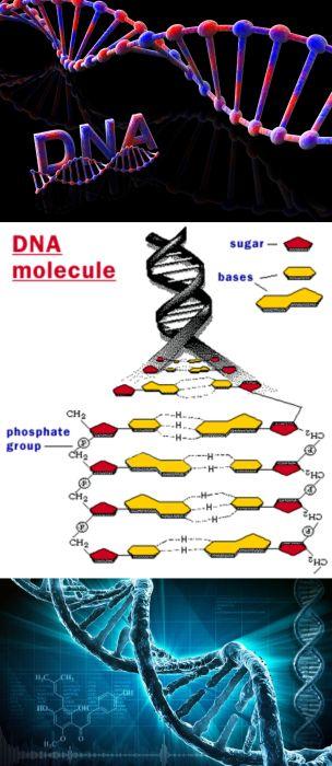 Ad:  DNA2.jpg Gösterim: 4537 Boyut:  46.8 KB