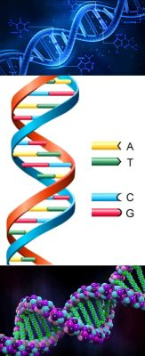 Ad:  DNA3.jpg Gösterim: 4390 Boyut:  16.7 KB