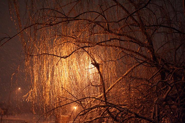 Ad:  willow_snow.jpg Gösterim: 115 Boyut:  188.1 KB