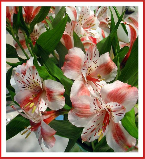 Ad:  lilies1_copy.jpg Gösterim: 209 Boyut:  75.4 KB