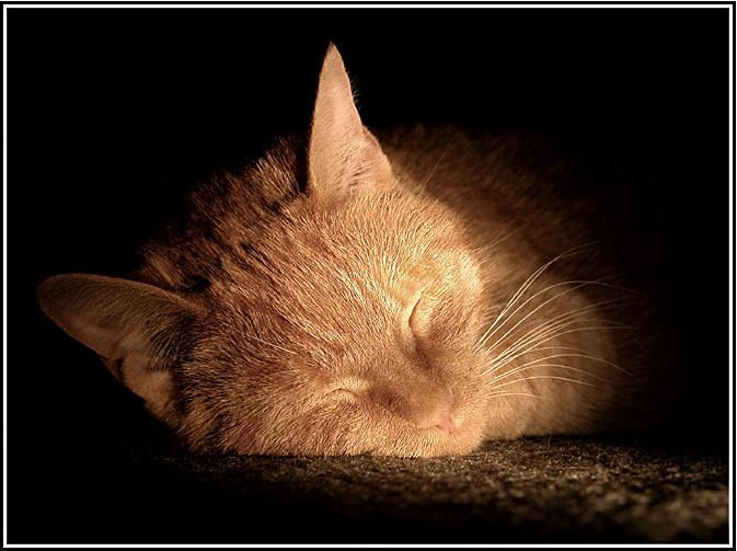 Ad:  tinka-sleepingtl.jpg Gösterim: 129 Boyut:  48.3 KB