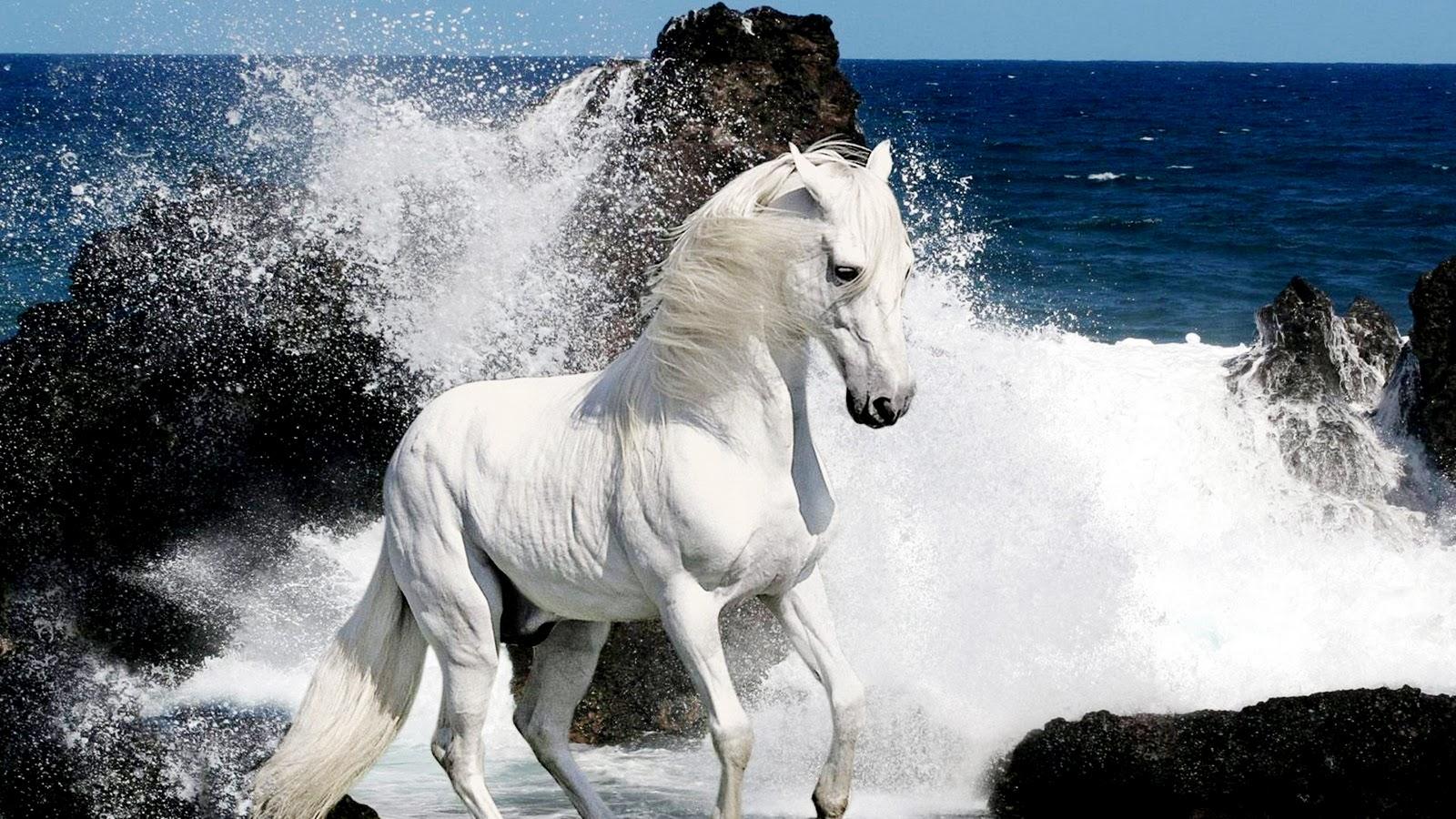 Ad:  White_Horse_and_Waves_HD_Wallpaper-Vvallpaper.Net.jpg Gösterim: 1308 Boyut:  375.1 KB