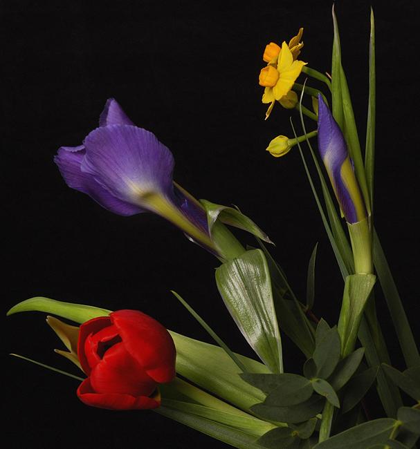 Ad:  spring-tricolore4a-usm.jpg Gösterim: 167 Boyut:  200.3 KB