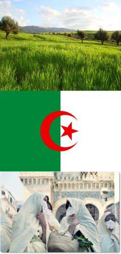 Ad:  Cezayir7.jpg Gösterim: 445 Boyut:  23.4 KB