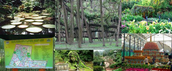 Ad:  Hindistan Botanik Bahçesi.jpg Gösterim: 309 Boyut:  52.6 KB