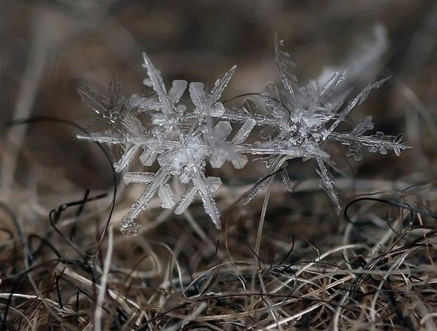 Ad:  kar-kristalleri6.jpg Gösterim: 132 Boyut:  102.1 KB