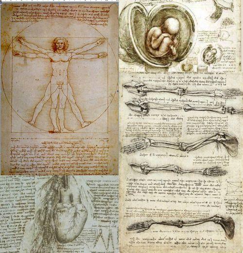 Ad:  anatomi2.jpg Gösterim: 835 Boyut:  77.4 KB